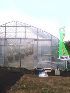 種子島試験農園1